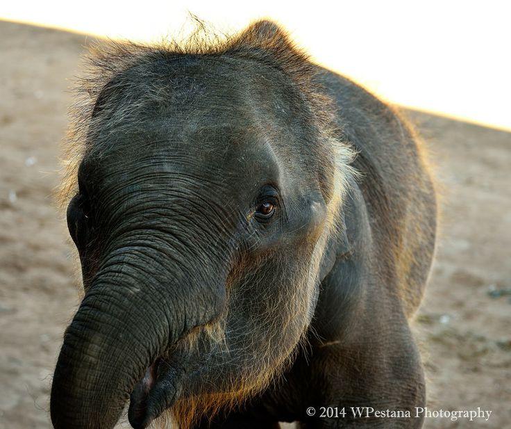 Baby elephant by Welbis Pestana on 500px
