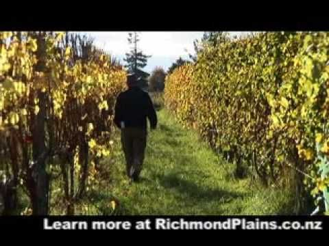 In New Zealand Day 8 Nelson Wine Region HippyGourmet #nzwine