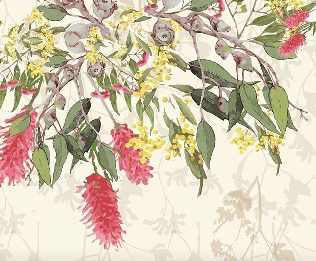Happy #australiaday to all my fellow aussies!  Here is a snippet of a new print I am developing based on #native #australian #flora. I can just smell the beautiful #gumtrees  miss you beautiful land down under and look forward to seeing you verry soon!  #new #print #illustration #design #wattle #gumnuts #eucalyptus #bottlebrush #verrykerry