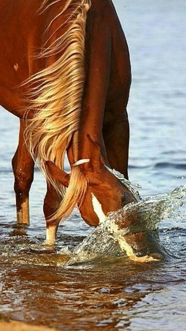 Horse shaking his head in the water to get a fresher drink. This is such a cool horse photo!
