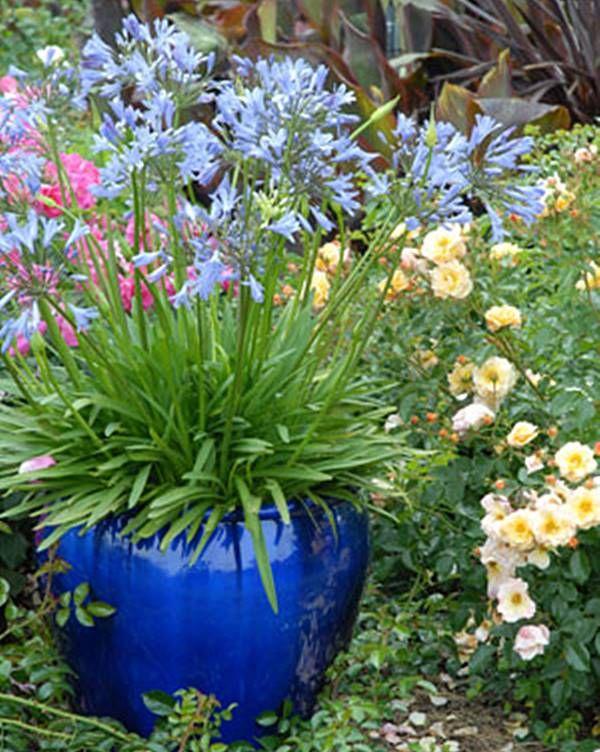 Dicas para escolher plantas que ficam lindas, florescem e duram na sua varanda, jardim, quintal