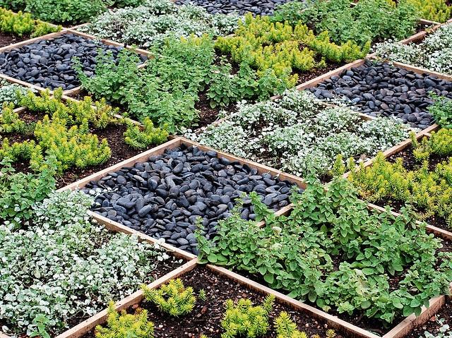 Pin by kelli sexton on gardening inspiration pinterest for Checkerboard garden designs