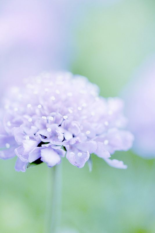 magical. wedding flowers. lavender flowers. pastel colored flowers. flower healing. purple and green.
