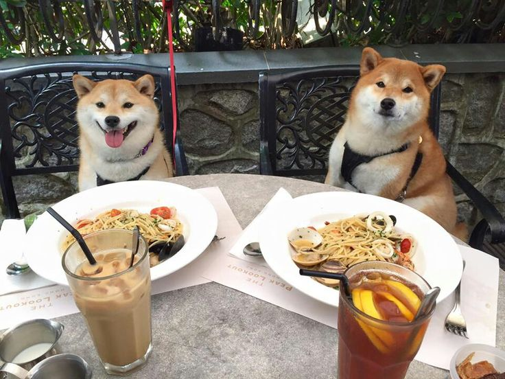 Shiba dining al fresco