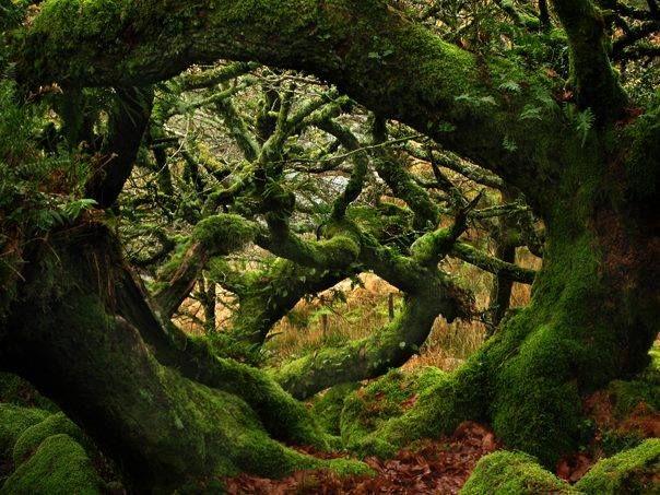 Wistman's Wood, Dartmoor, Devon, England via Old Moss Woman's Secret Garden FB