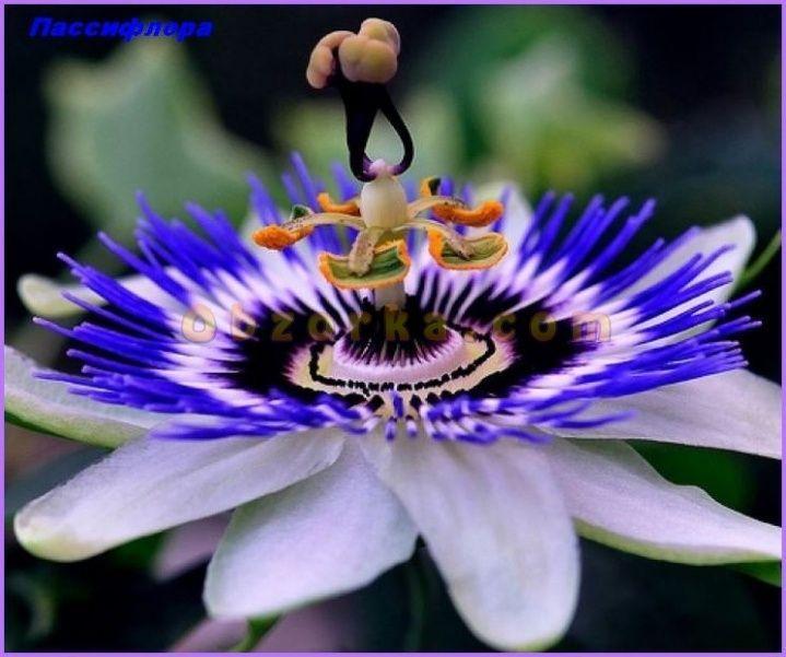 Цветы экзотические