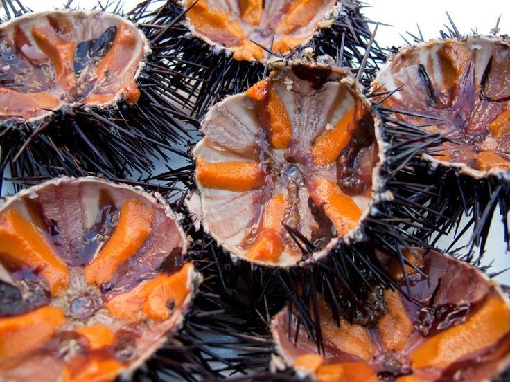 Sea urchins from Crete island– Αχινοί από την Κρήτη