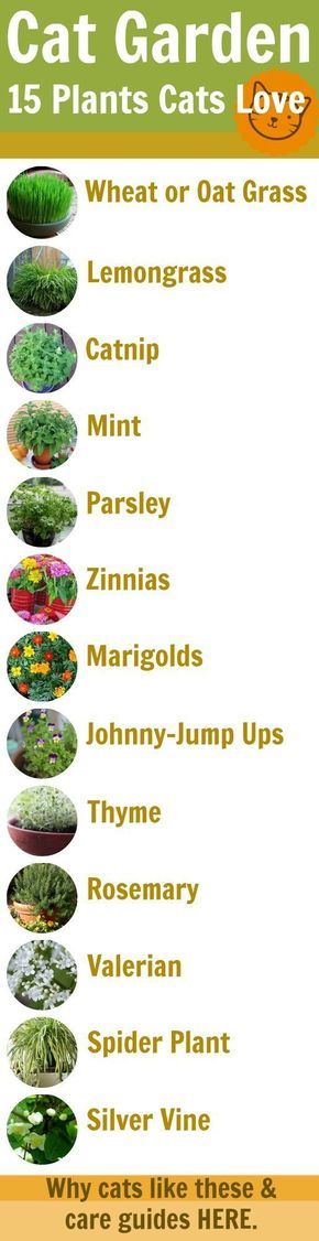 Plants in garden that's good for your Persians