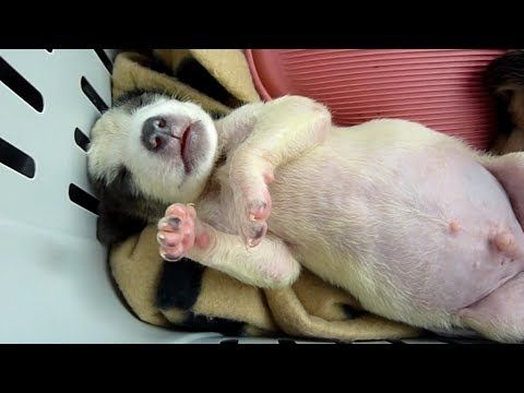 Best Sad Dog Stories Ideas On Pinterest Dog Stories - Dog escapes from kennel to comfort abandoned crying puppies