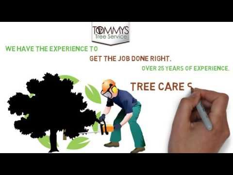 Tommy's Tree Services (http://tommystreeservices.com/) is your one stop shop for all tree care services in Austin, Texas. We provide the highest quality service because of our staff of fully qualified arborists who can deal with all aspects of tree care. Whether you are an individual homeowner with a single tree that needs attention or you a company that requires commercial pruning and maintenance, Tommy's Tree Services is there to help.