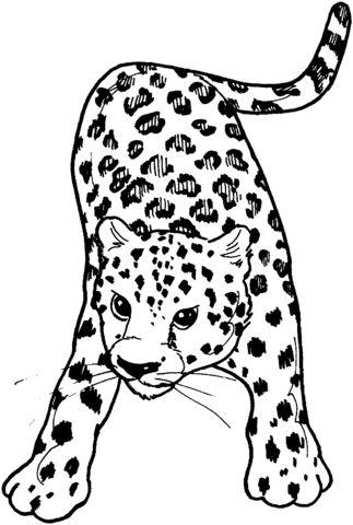 Leopardo de Frente Dibujo para colorear | dibujo | Pinterest ...