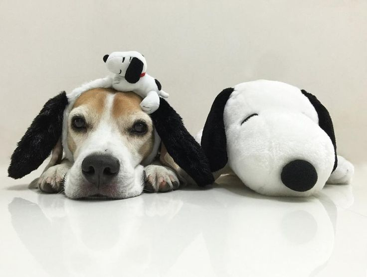 Snoopy and the beagle!                                                                                                                                                     More