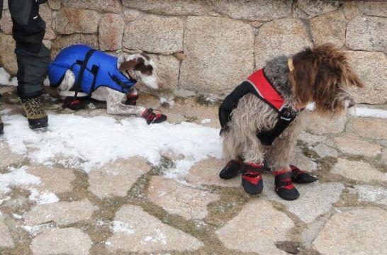 Cómo proteger las almohadillas del perro | EROSKI CONSUMER. Para proteger las almohadillas del perro, los paseos deben combinar el asfalto con las áreas verdes y es posible utilizar botines caninos para esta zona de apoyo