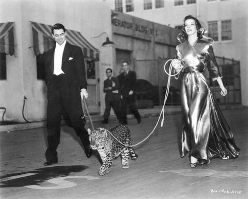 """Bringing Up Baby (1938)... Cary Grant and Katherine Hepburn accompany their co-star """"Baby"""" on a walk through the RKO Studios lot."""