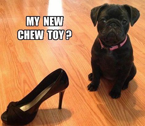 67 best images about Dog Memes on Pinterest | Haha, Puns ...