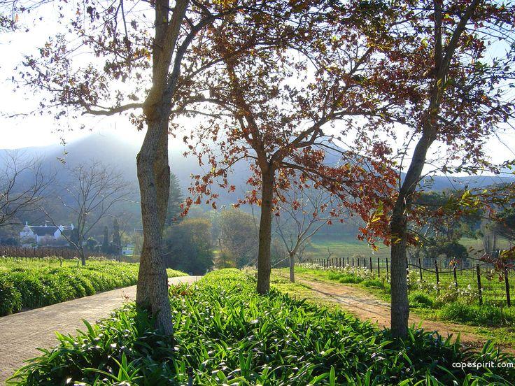 The Constantia Wine Route, Cape Wine Farms