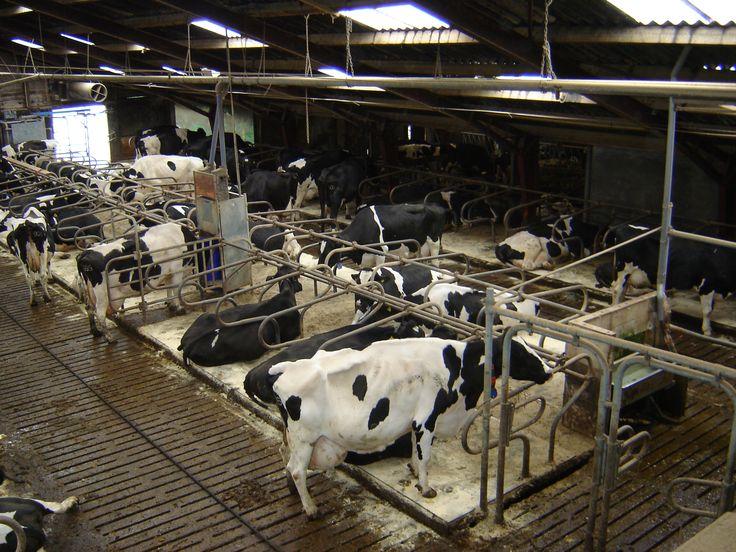 Bij kaasboerderij Weezenspijk