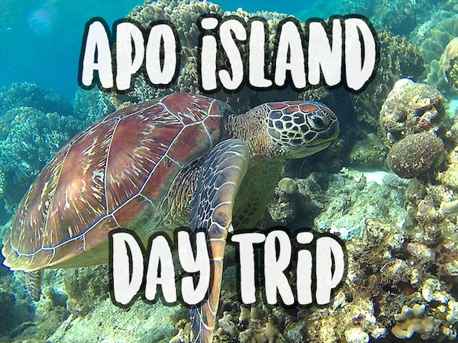 How to do the Apo Island day trip and have even time to go to Siquijor after the incredible snorkeling with sea turtles. Top tips to enjoy...