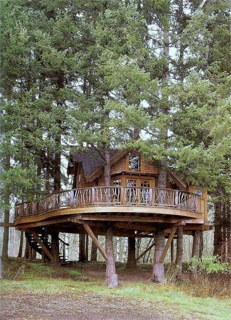 AMAZING tree house with a wrap around deck!