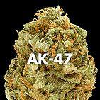 Voting to Legalize Marijuana marijuana# cannabis Marijuana, otherwise known as…weed for sale, Buy Marijuana Online, Buy Weed Online, Cannabis Edibles. Text at 707-335-4526 0rder at www.marijuanaplug.com