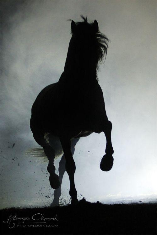 Equine Photography: Katarzyna Okrzesik on Cavalcade