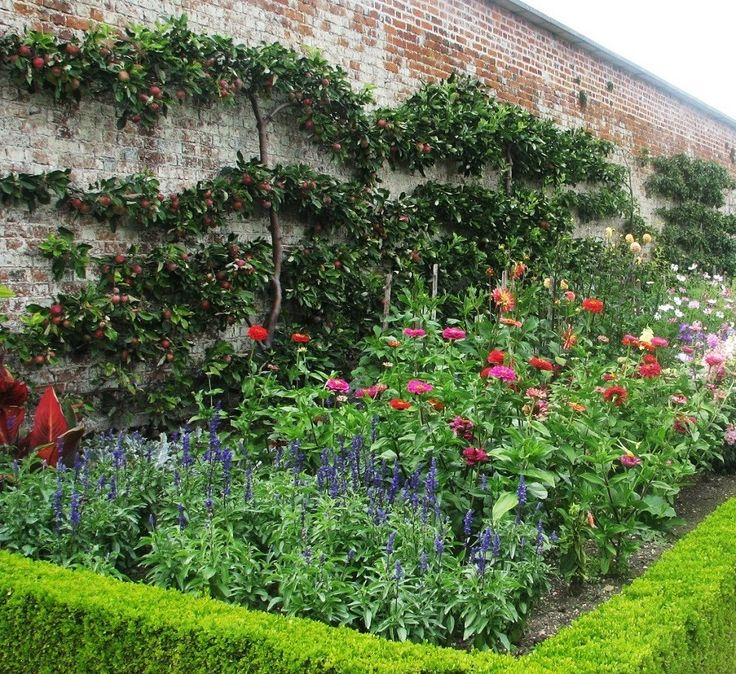 Espalier & Wall Trees. Practical and beautiful use of small narrow spaces
