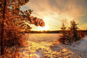 Scandinavian winter 4 by Floreina-Photography #photography #winter #snow #light #trees #cold #romantic #winter is coming #scandinavia #finland #sunset #beautiful #lovely #nature