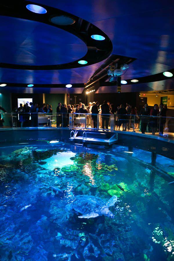 17 Best Ideas About New England Aquarium On Pinterest
