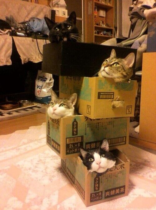 """Where should I put these cats?"" ""Oh, just stack them anywhere!"""