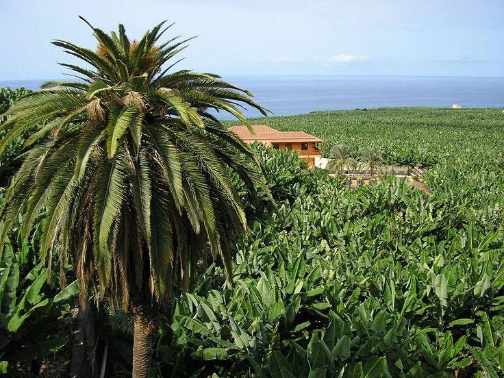 34 best images about paisajes agrarios de espa a on pinterest trees la gomera and balearic - Tipos de paisajes ...