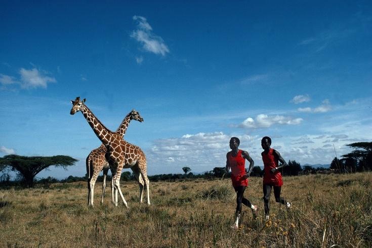 Photography by Neil Leifer. Kenya marathon runners Kipkoech Cheruiyot and Charles Cheruiyot run next to giraffes in Nanyuki, Kenya.