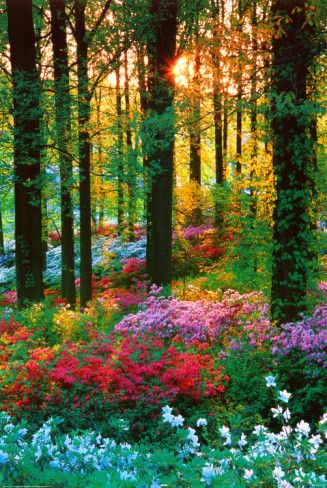 Flower Forest PosterGod, Magic Forests, Nature, Woodland Gardens, Colors, Beautiful, Trees, Places, Flower