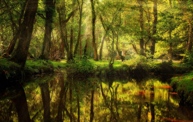 "Enchanted Forest, New Forest, Hampshire, England. ""Закалдованный лес"". Национальный парк Новый Лес, графство Хэмпшир, Англия."