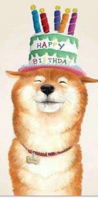 ae59c17cfe7d16737551f81378934ef0 birthday stuff happy birthday 24 best shiba inu images on pinterest shiba inu, adorable animals