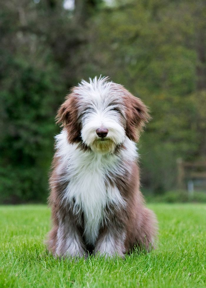 12 Medium Size Dogs That Just Might Be Perfect For You Medium Sized Dogs Breeds Medium Sized Dogs Dog Breeds That Dont Shed