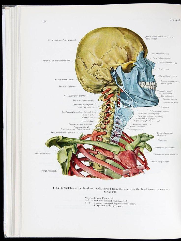 10 besten Topographische Anatomie Des Menschen — «Топографическая ...