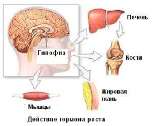 омоложение с помощью гормона роста с помощью соматотропина. Интересная методика омоложения. Плюсы и минусы.