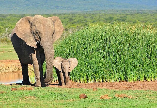 I love them. .!! Credit : @elephantsotworld - Gorgeous little elephant and its mother For info about promoting your elephant art or crafts send me a direct message @elephant.gifts or emailelephantgifts@outlook.com . Follow @elephant.gifts for inspiring elephant images and videos every day! . . #elephant #elephants #elephantlove
