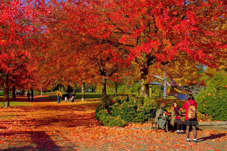 VANCOUVER AUTUMN - You had to be there. Taken at the beginning of November on a beautiful sunny day near the entrance to Stanley Park. The lady to the left in the foreground with the red leaf in her hair is actually a bronze statue. Many people, particularly tourists, like to take their picture next to her. #Vancouver #Autumn