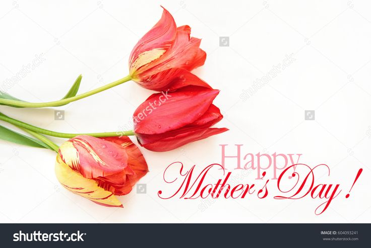Mothers day background with red tulips and Happy mother's day text