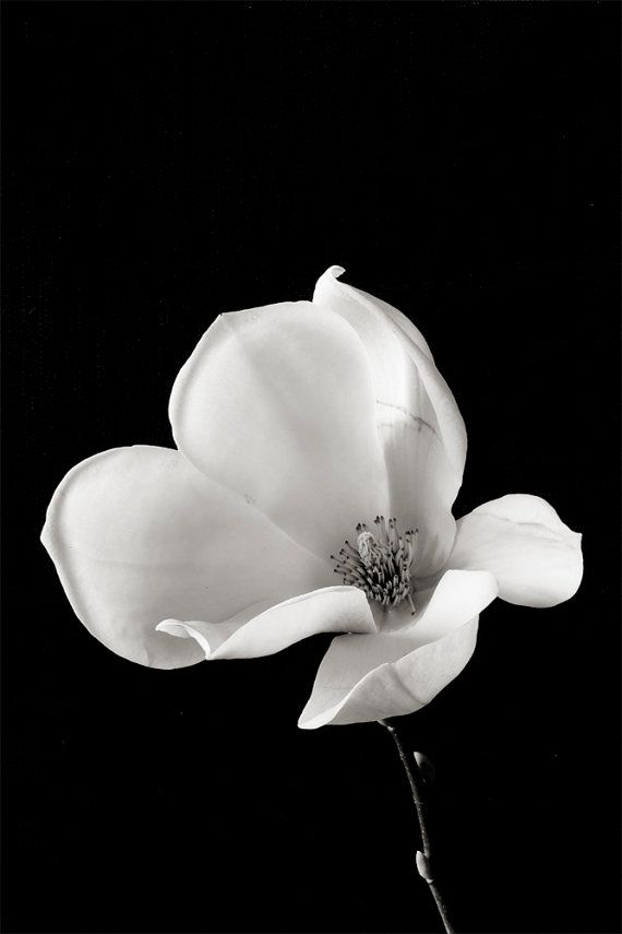 Botanical Black and White No. 88230