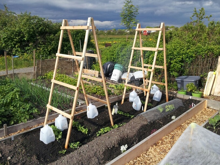 63 best images about garden structures and trellises on for Vegetable garden trellis designs