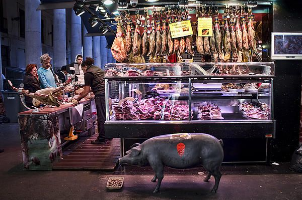 Iberico Ham shop in La Boqueria Market in Barcelona with brass pig statue eating real acorns amid shoppers