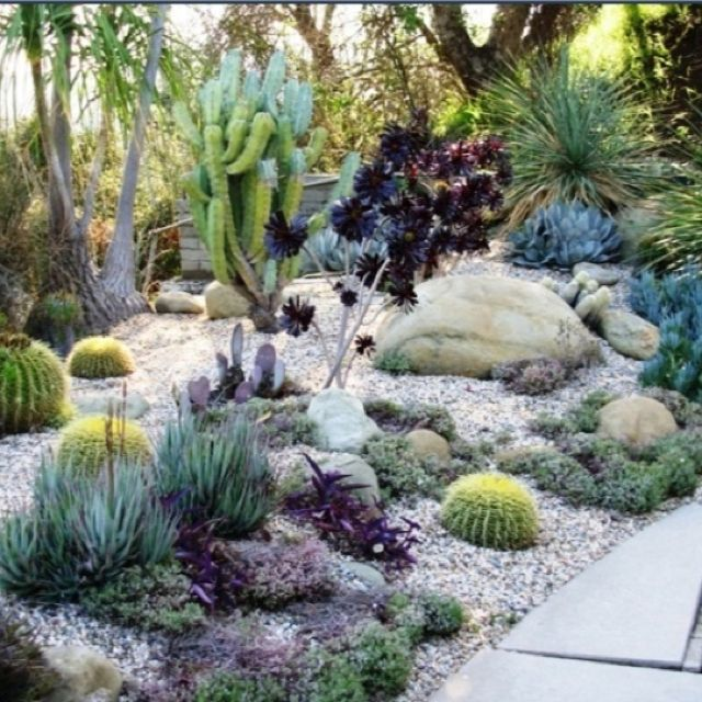 Various Front Yard Ideas For Beginners Who Want To: 429 Best Images About Desert Landscaping Ideas On