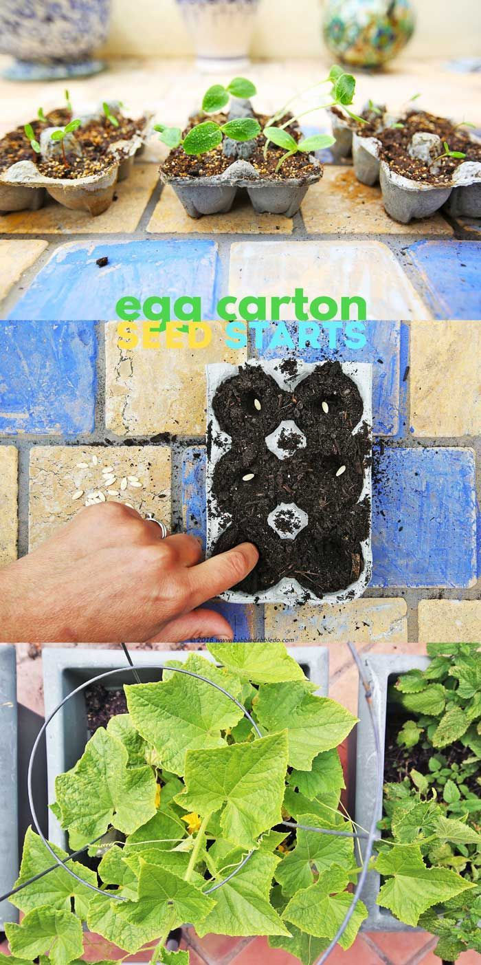 Easy garden project for kids: start seeds in recycled egg cartons.