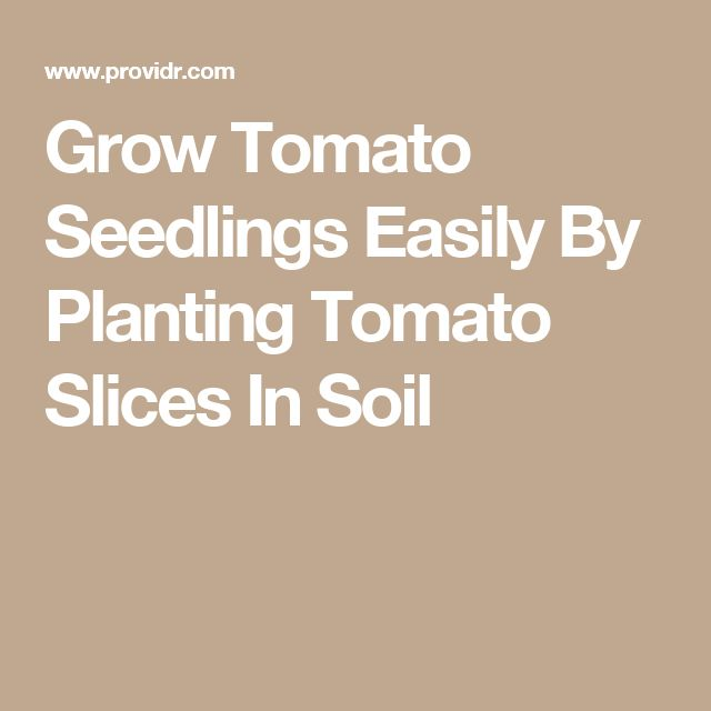 Grow Tomato Seedlings Easily By Planting Tomato Slices In 400 x 300