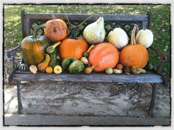 Conservare le zucche di Halloween ornamentali