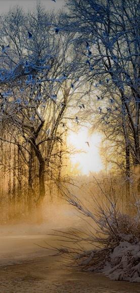 Morning sunlight breaking through the winter mist