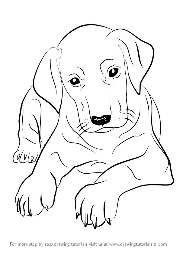 Learn How to Draw Doberman Puppy (Dogs) Step by Step