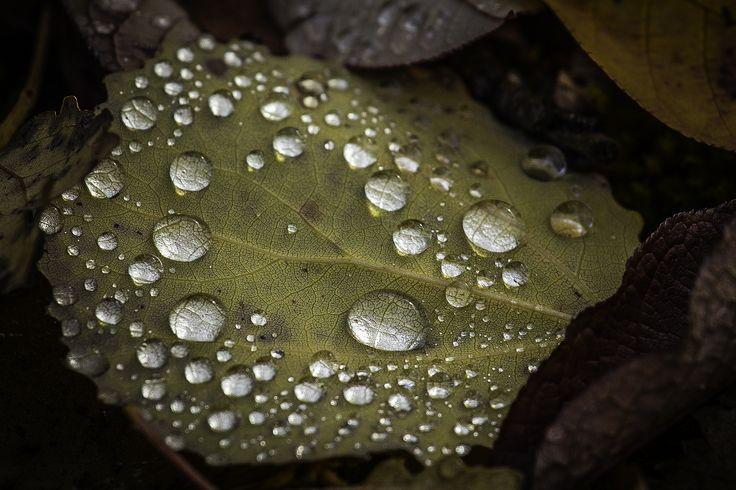 Moisture on autumn leaf